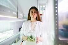 Ученые с помощью гормона сна защищают растения от загрязнений