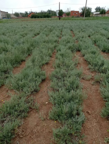 Новые технологии возделывания земли от ученых КалмГУ помогут в борьбе с опустыниванием.