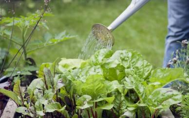 Ученые смогли разработать модель полива, которая повышает урожайность