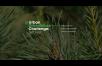 Международный студенческий конкурс Urban Greenhouse Challenge впервые пройдет в России