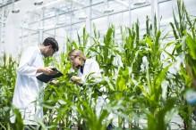 Федеральную научно-техническую программу АПК продлят до 2030 года
