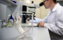 Минобрнауки назвал не выполнившие ФЦП научные организации и вузы